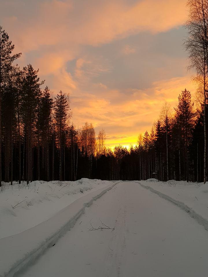 talvitie